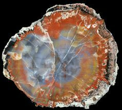 "Buy Brilliant, Polished Arizona Petrified Wood Round - 5"" - #56014"