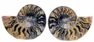 "4.3"" Split Black/Orange Ammonite Pair - Unusual Coloration For Sale, #55607"