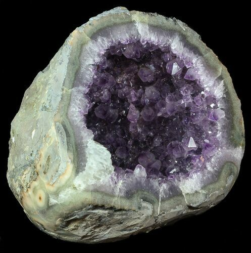 "8.6"" Purple Amethyst Geode with Calcite - Uruguay"