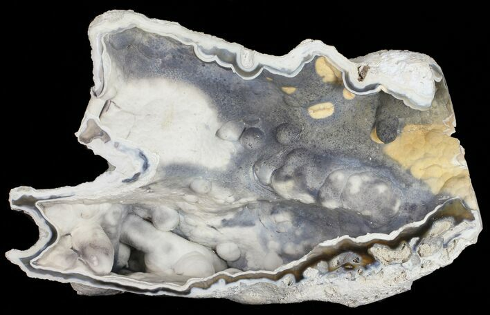 "8.5"" Beautiful, Agatized Fossil Coral Geode - Florida"