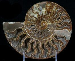 "8.1"" Cut Ammonite Fossil (Half) - Beautifully Agatized For Sale, #58286"
