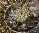 "9"" Cut Ammonite Fossil (Half) - Beautifully Agatized - #58280-2"