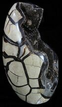 "Buy 6.8"" Polished Septarian Geode Sculpture - Black Crystals - #55021"