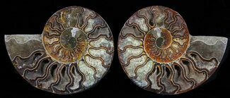 "Buy 5.85"" Cut & Polished Ammonite Pair - Agatized - #58711"