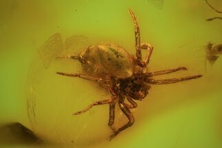 Detailed Fossil Spider (Aranea) In Baltic Amber For Sale, #59411