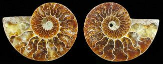 "2.8"" Polished Ammonite Pair - Agatized For Sale, #59435"