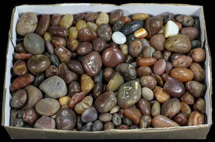 Wholesale Lot: Rough Carnelian Agate 10 KG (22 lbs)
