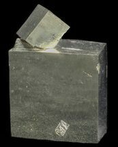 Pyrite - Fossils For Sale - #60216