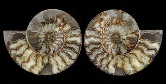 "8"" Cut & Polished Ammonite Pair - Agatized For Sale, #60287"