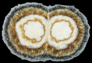 Baryte & Marcasite - Fossils For Sale - #60381