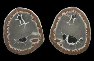 "2.4"" Cut/Polished Septarian Nodule Pair - Morocco  For Sale, #60596"