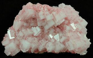 "Buy 4.1"" Pink Halite Crystal Plate - Trona, California - #61051"