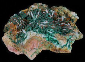 "1.8"" Malachite Crystals on Barite - Morocco For Sale, #61754"