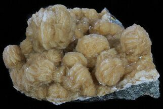 Barite & Marcasite - Fossils For Sale - #61761