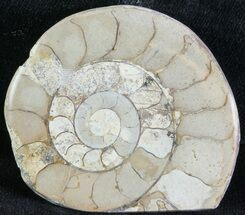 "Buy 2"" Cut and Polished Lower Jurassic Ammonite - England - #62551"