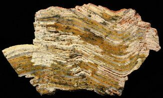 "5.1"" Strelley Pool Stromatolite - 3.43 Billion Years Old For Sale, #62750"