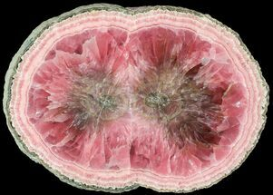 "4.9"" Rhodochrosite Stalactite Slice - Excellent Coloration For Sale, #63152"