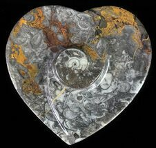 "4.5"" Heart Shaped Fossil Goniatite Dish For Sale, #61271"