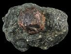 "Huge, 1.9"" Almandine Garnet In Rock - Broken Hill, Australia - #63308-1"