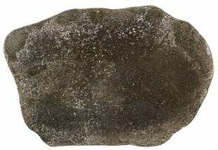 "Buy 6"" Pyritized, Polished Iguanodon Bone - Isle Of Wight - #63325"