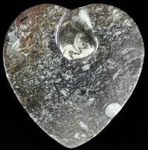 "4.5"" Heart Shaped Fossil Goniatite Dish For Sale, #61256"