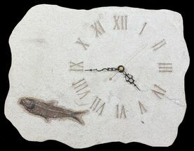 "Buy 12"" Wide Clock With Natural Fossil Fish - Wyoming - #64195"