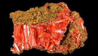 "1.1"" Bright Orange Crocoite Crystals - Tasmania  For Sale, #64352"