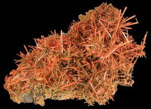 "4.1"" Bright Orange Crocoite Crystals - Tasmania  For Sale, #64364"