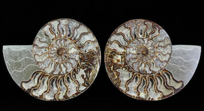 "8.5"" Split Fossil Ammonite Pair - Agatized"