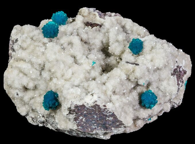 Spectacular Blue Cavansite Clusters on Stilbite - India