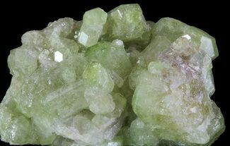 "Buy 1.4"" Sparkly Vesuvianite - Jeffrey Mine, Canada - #64081"