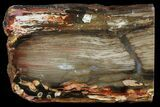 "5.8"" Section of Fossilized ""Peanut Wood"" - Australia - #65361-1"