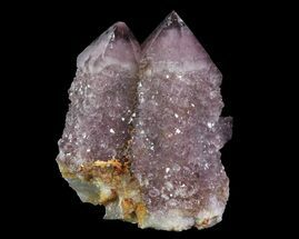 "1.4"" Cactus Quartz (Amethyst) Crystal Cluster - South Africa For Sale, #64238"