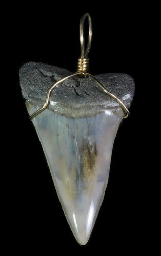 "2.1"" Polished, Fossil Mako Shark Tooth Pendant"