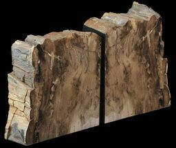"5.6"" Petrified Wood Bookends - Oregon For Sale, #65969"
