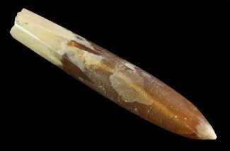 "3.2"" Agatized Belemnite Fossil - Sweden For Sale, #66239"