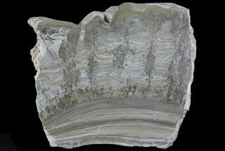Stromatolite - Fossils For Sale - #67416