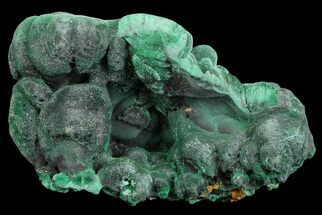 "Buy Silky, 1.4"" Botryoidal Malachite Crystal Formation - Congo - #67456"