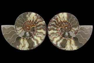 "9"" Cut & Polished Ammonite Pair - Agatized For Sale, #67904"