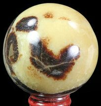 Septarian - Fossils For Sale - #67866