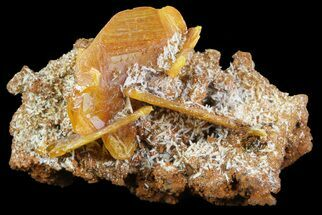 "1.4"" Wulfenite Crystals on Matrix - Mexico For Sale, #67700"
