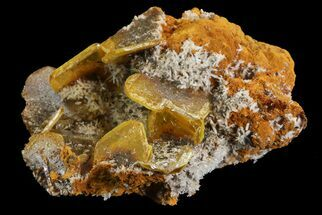 "Buy 1.3"" Wulfenite Crystals on Matrix - Mexico - #67702"