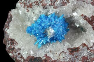 Vibrant Blue Cavansite Cluster on Stilbite - India For Sale, #67799