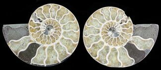 "3.3"" Polished Ammonite Pair - Agatized For Sale, #68831"