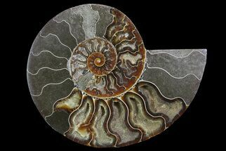 "Buy Bargain, 6.6"" Cut Ammonite Fossil (Half) - Agatized - #69049"
