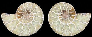 "2.9"" Polished Ammonite Pair - Agatized For Sale, #68852"