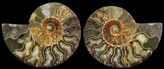 "4.8"" Cut & Polished Ammonite Pair - Agatized For Sale, #69029"