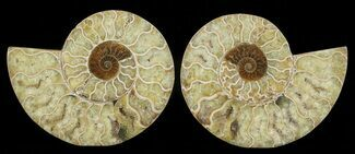 "Buy 5.1"" Cut & Polished Ammonite Pair - Agatized - #69031"