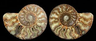 "4.2"" Cut & Polished Ammonite Pair - Agatized For Sale, #69011"