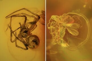 Order Aranea (Spider) & Order Diptera (Fly) - Fossils For Sale - #69294